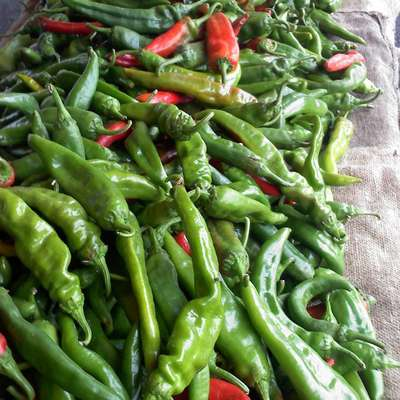 Roasted Green Chile Stew - RecipeNode.com